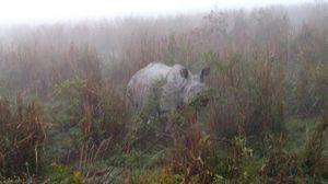 Into The Wild: Rhinoceros of Kaziranga!