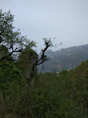 Exploring Kasauli - A Guide to a Trip to Serenity