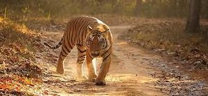 Ranthambore National Park: Date with nature