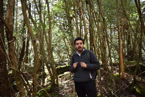 Inside Aokigahara- Japan's Famous Suicide Forest #colourgreen