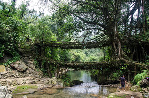 Living Root Bridge !!!