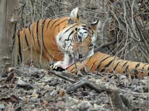 Pench National Park 1/undefined by Tripoto