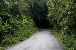 A Scenic Hill Station Near Bangalore: Scotlandish Coorg