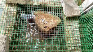 The Hindu Mythological Floating stone at Dhanushkodi!