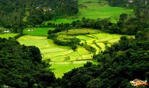 The perfect short tour to Coorg, the Scotland of India