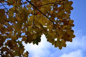 English Autumns