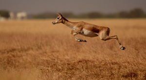 Blackbuck National Park 1/undefined by Tripoto