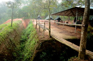 Thekkady - camp in the wild and jungle safari on foot !