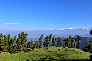 Chopta, You beauty : Chopta, Tungnath, Chandrashila, Deoria Tal