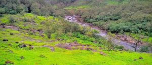 Lonavala to Bhimashankar [Lo-Bhi]- An Endurance trek - Shoe Bytes