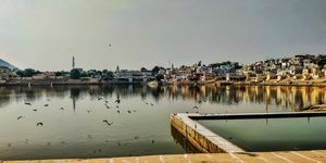 Exceptional Surprises of the Sacred Pushkar Ji