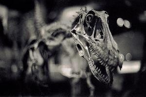 Melbourne Museum 1/1 by Tripoto