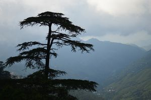 Shimla _ The underrated paradise
