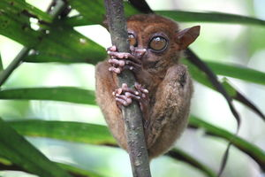 Philippine Tarsier and Wildlife Sanctuary 1/undefined by Tripoto
