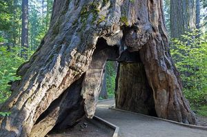 Calaveras Big Trees State Park 1/2 by Tripoto