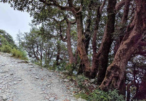 Terrific Triund | Gateway of the Golden Sunset and Shiny night