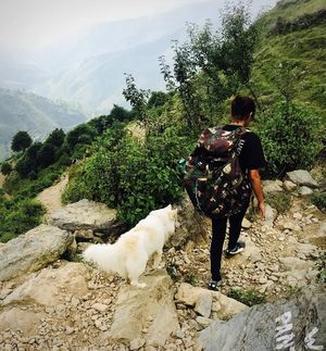 Nag Tibba Trek: Travel with your dog for a pawsome vacation!!!