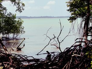 The Ultimate Chek Jawa Walkthrough