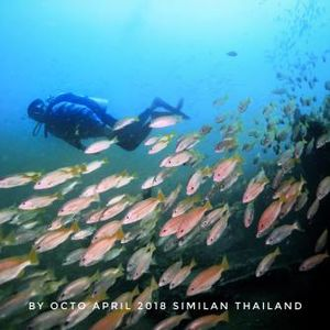 Similan Islands National Park 1/undefined by Tripoto