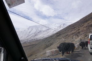 Tracing the Oldest Silk Route and the Highest Motorable Pass
