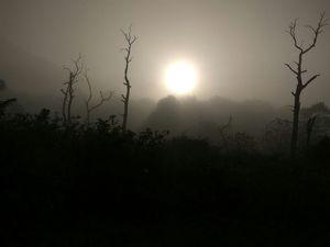 The Wild Road ,Masinagudi ->Theppakadu->Gudalur.