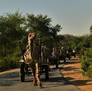 Sariska Wild Life Reserve - Alwar, Rajashtan