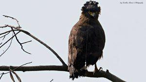 Delhi's own bird sanctuary-OBS!