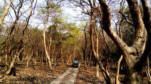 Crushing On Nature in Pabitora Wildlife Sanctuary, Assam
