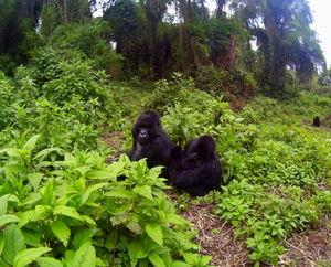 Rwanda - A Story of Resurrection