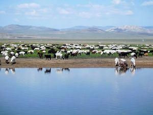 Wild Mongolia