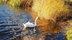 Virginia Water Park: A beautiful autumn walk…