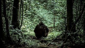 Chimpanzee tracking one fascinating activity in Uganda.