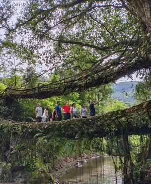 Doubledecker living root bridge