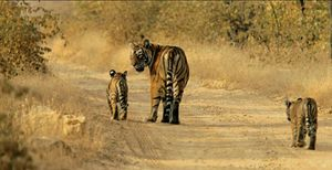 Sariska Tiger Reserve - My First Encounter With The Wild!