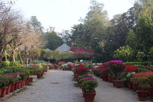 A Ramble Through Famed Park - Lodhi Gardens