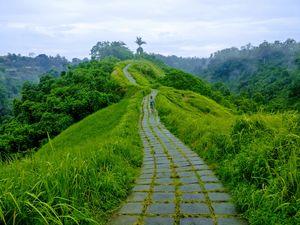Campuhan Ridge walk - Ubud, Bali. Free activity , priceless experience !