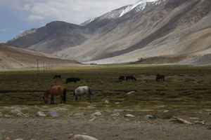 Changthang Cold Desert Wildlife Sanctuary 1/undefined by Tripoto