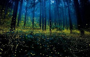 The Fireflies Festival!