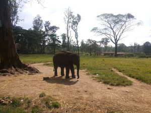 A pinch of Coffee, a dash of Nature , and Scottish feels; Coorg