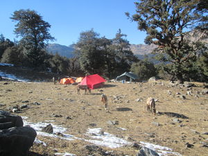 Beware of this Scamming Trek Organisation in Auli!