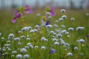 Mumbai to Kaas Plateau: A visit to western ghat's Valley of Flower