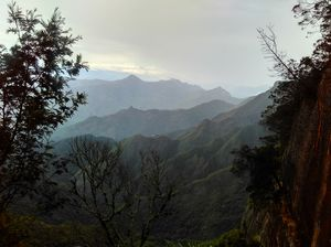 Kodai- The Gift of the Forest