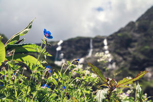 Haseen Vaadiyan aur Khula Aasmaan :)  A complete guide to Valley of Flowers !!