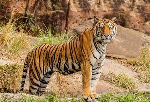 Bori Wildlife Sanctuary –Inside India's Oldest Forest Reserve