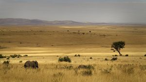 The Perfect Holiday In The Wilderness: Southern Africa Vs Eastern Africa