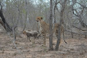 Awesome  (3rd) day at Kruger Park
