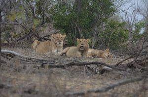 Short (4th) day at Kruger Park