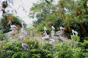 A Bird Sanctuary 3 Hours Away From Bengaluru, is Every Bird Watchers Delight