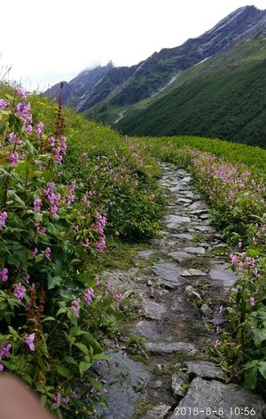 How my planless solo to the Valley of Flowers, Hemkund Sahib and Mana became everybody's plan.