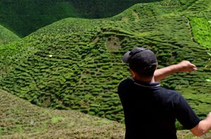 Cameron Highlands: Malaysia's 'Little England'